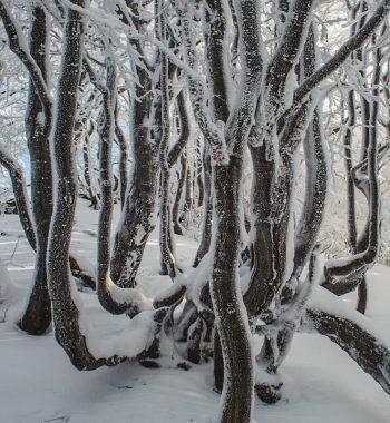 Winter in Poland VIII