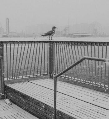 Lone seagull in Coney Island